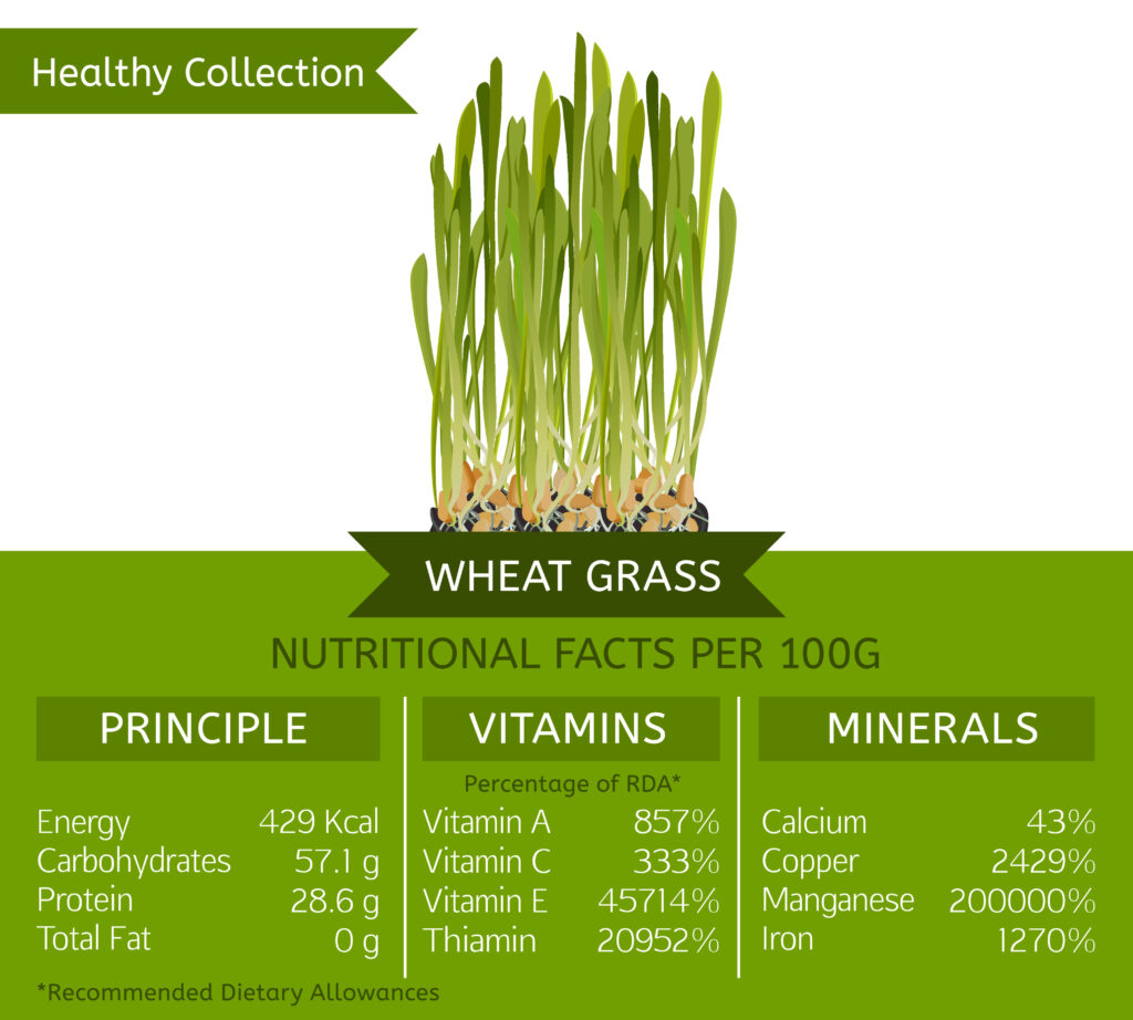 NUTRIENT PROFILE OF WHEATGRASS